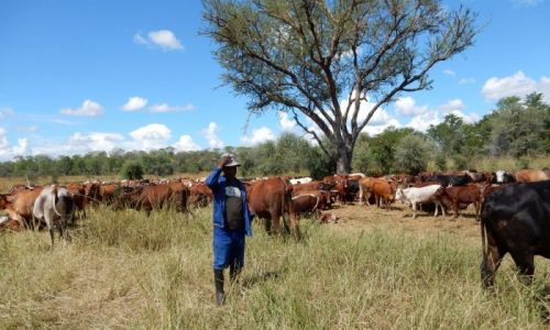 Holistica Management en Dimba Ngombe Ranch