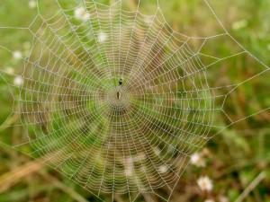 redes de apoyo mutuo - resiliencia local