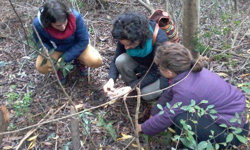 Iniciando la etapa de observación e investigación en el proceso de diseño en permacultura