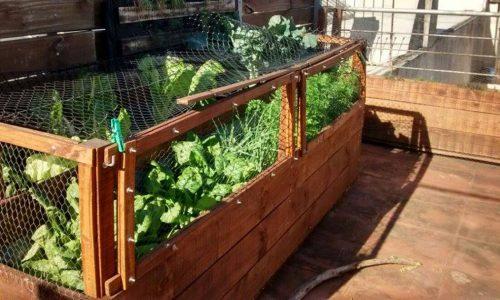 Huerta orgánica en espacio urbano