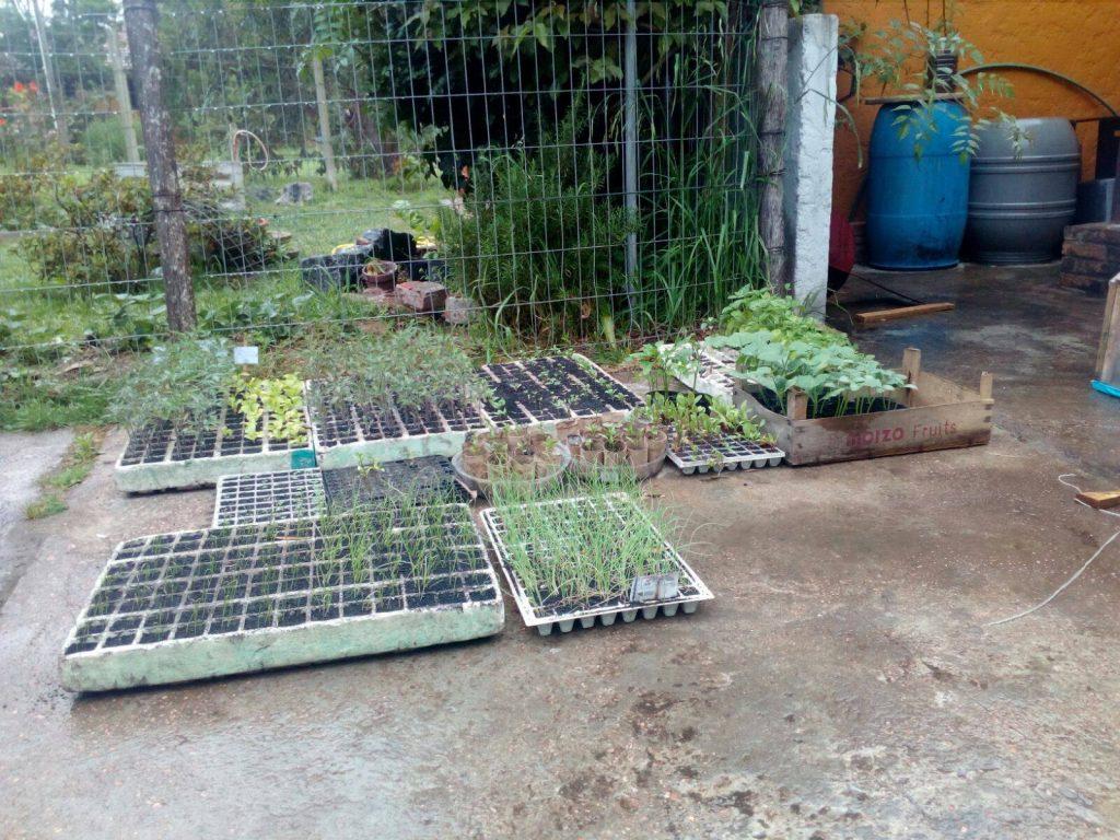 semilleroas regandose con la lluvia suave